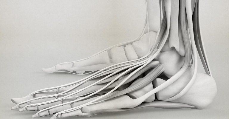 BellaSeno évalue la technologie des polymères résorbables pour la reconstruction des tendons et des ligaments